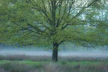 Mist onder de Eik van Geert Brosens