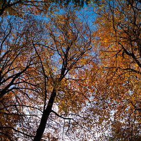 Hersfstbomen van Leo Kramp