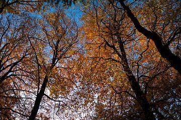 Hersfstbomen van Leo Kramp Fotografie