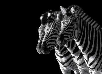 Zebras von Nicolette Uchtmann