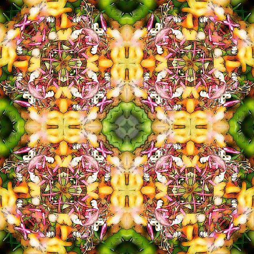 Honeysuckle Square