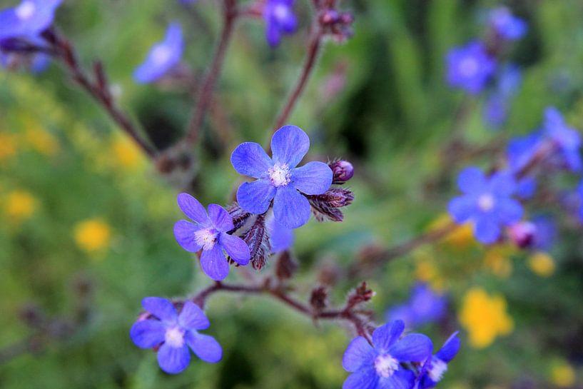 The Blue Ones van Cornelis (Cees) Cornelissen