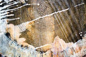Nature's Paintings - Tree Wood Close Up 2 van Nicole Schyns