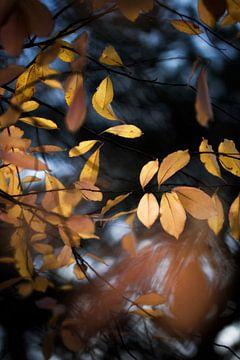 Again autumn leaves van Bob Daalder