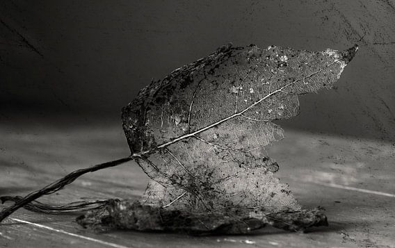 Bladeren verdorren van Ellen Driesse