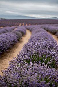 Lavendel landschap van Anne Loman