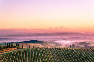 Weinberg in der toskanischen Landschaft von Tony Buijse