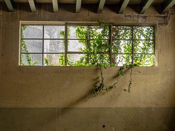 Fenêtre avec des plantes