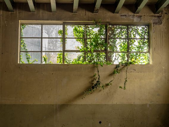 Fenster mit Pflanzen