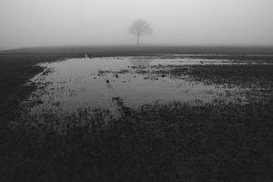 Eenzame boon in de mist II