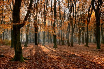 Herfst in beukenbos (rode versie) van Cor de Hamer
