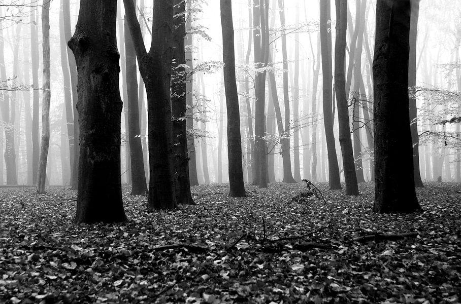 Fallen leaves van Jenny de Groot