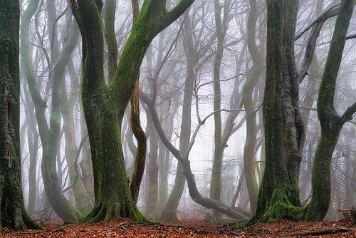 Terugkeer naar het magische bos
