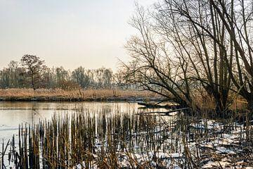 Afgebroken rietstengels in de Biesbosch von Ruud Morijn