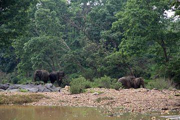Elefanten in Kanha NP von Cora Unk