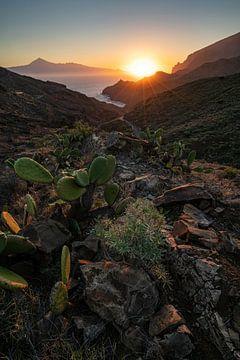 La famille Cactus se réveille sur Joris Pannemans - Loris Photography