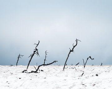 Winterse hoogvlakte van Joshua van Nierop