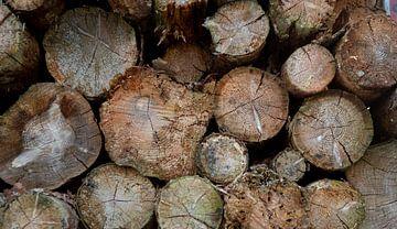 Frisch gefällte Bäume von Marieke Smetsers