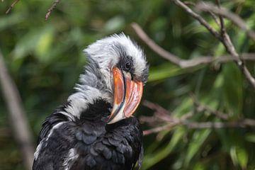 Nashornvogel von Anjella Buckens
