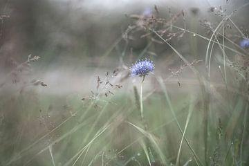 Blumen Teil 163