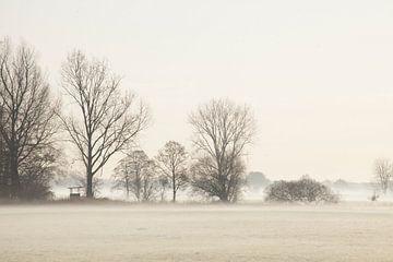Herfststemming met grondmist en bomen, Fischerhude, Nedersaksen, Duitsland, Europa van Torsten Krüger