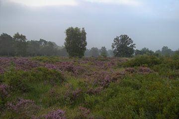 heide landschap Malpie van Jeroen Grit