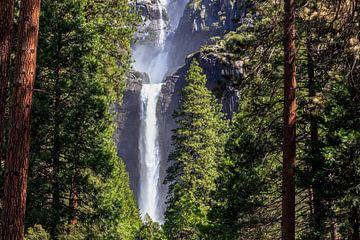 Lower Yellowstone Falls van Thomas Klinder