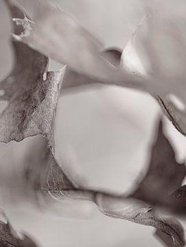 Automne feuilles de chêne brun macro désaturées abstrait sur John Quendag