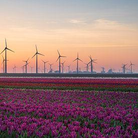 Tulips & Turbines van Sander van der Werf