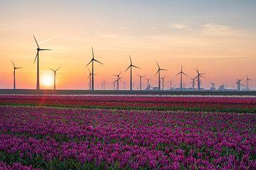 Tulips & Turbines sur Sander van der Werf