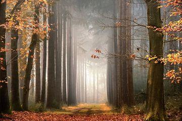 Traumherbst von Lars van de Goor
