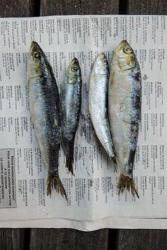 Du poisson frais avec de vieilles nouvelles sur Studio Stiep