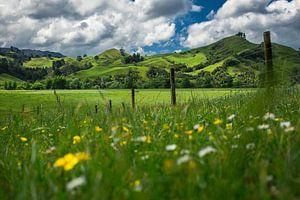 Groene heuvels van Coromandel, Nieuw-Zeeland