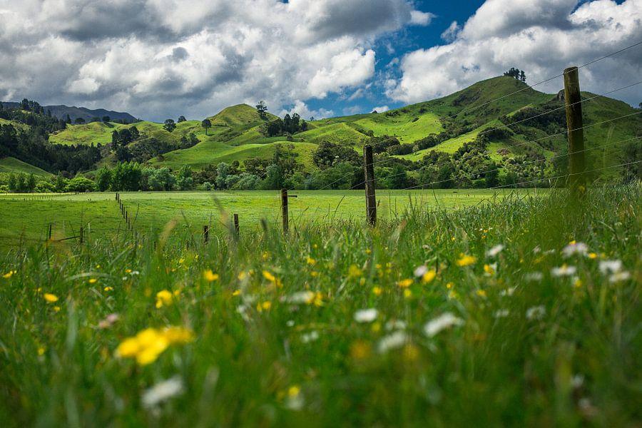 Groene heuvels van Coromandel, Nieuw-Zeeland van Martijn Smeets