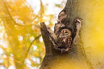 Bosuil in een boomholte van Marianne Jonkman