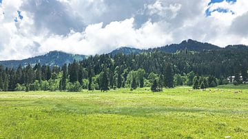 Grüne Alpenlandschaft mit Wiese, Wald, Bergen und Himmel