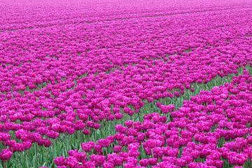 Tulpen von Bob Bleeker