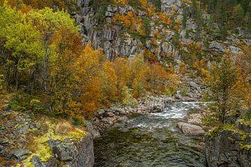Herfst kleuren bij een rivier in Noorwegen van Mickéle Godderis