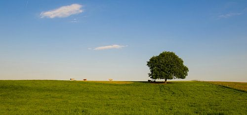 Panorama in het Limburgse Heuvelland
