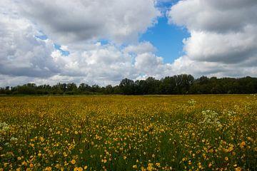 Gelbes Blumenfeld von Nynke Altenburg