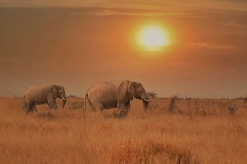 olifanten in zonsondergang zuid afrika van Linda Manzaneque