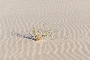 Helmgras op een fraai gegolfd strand
