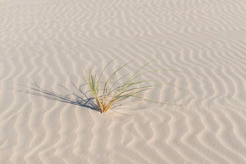 Helmgras op een fraai gegolfd strand van Tonko Oosterink