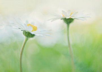 fröhliche Gänseblümchen von Remco loeffen