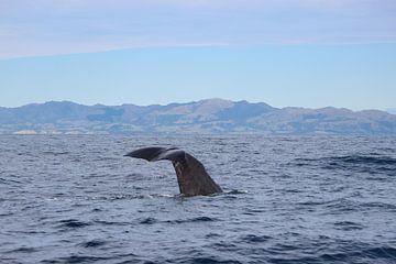 Wale Neuseeland von GoWildGoNaturepictures