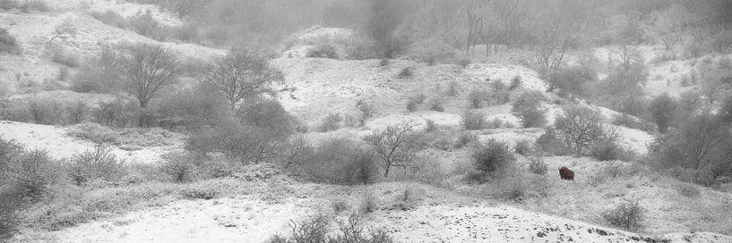 Einsamer Wisent-Bulle im Schneesturm von Frans Lemmens