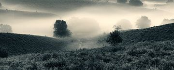 In de mist van