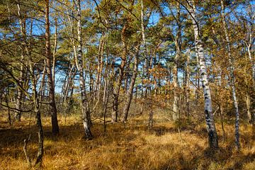 Les arbres dans la forêt sur Johan Vanbockryck