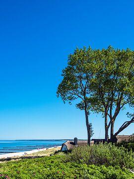 Strand an der Ostsee bei Ahrenshoop von Rico Ködder