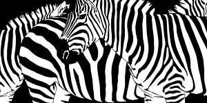 Verwirrende Zebrastreifen von